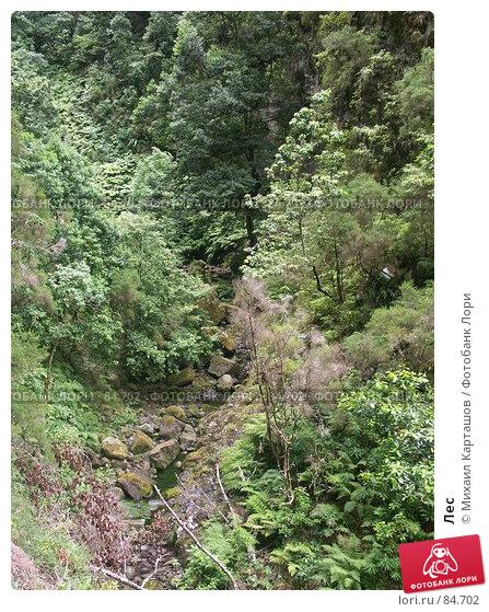 Лес, эксклюзивное фото № 84702, снято 28 июля 2017 г. (c) Михаил Карташов / Фотобанк Лори