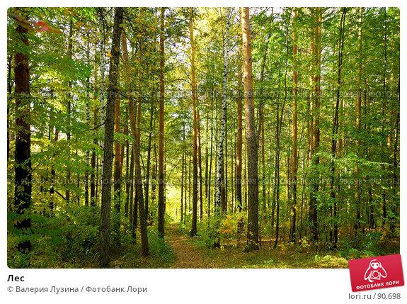 Лес, фото № 90698, снято 22 сентября 2007 г. (c) Валерия Потапова / Фотобанк Лори