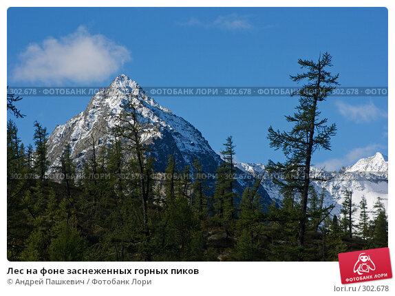 Лес на фоне заснеженных горных пиков, фото № 302678, снято 20 августа 2017 г. (c) Андрей Пашкевич / Фотобанк Лори
