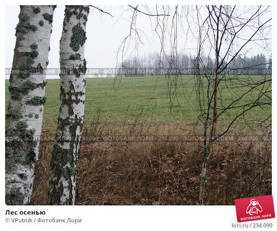Лес осенью, фото № 234090, снято 5 ноября 2004 г. (c) VPutnik / Фотобанк Лори