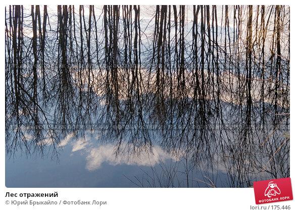 Купить «Лес отражений», фото № 175446, снято 14 января 2007 г. (c) Юрий Брыкайло / Фотобанк Лори