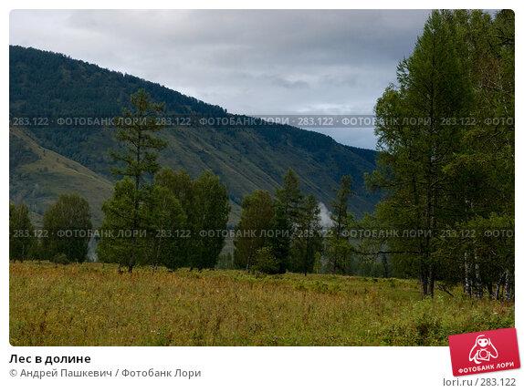 Купить «Лес в долине», фото № 283122, снято 21 апреля 2018 г. (c) Андрей Пашкевич / Фотобанк Лори