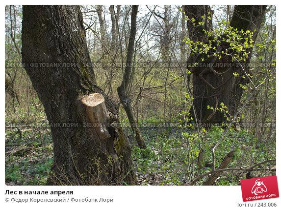 Лес в начале апреля, фото № 243006, снято 4 апреля 2008 г. (c) Федор Королевский / Фотобанк Лори