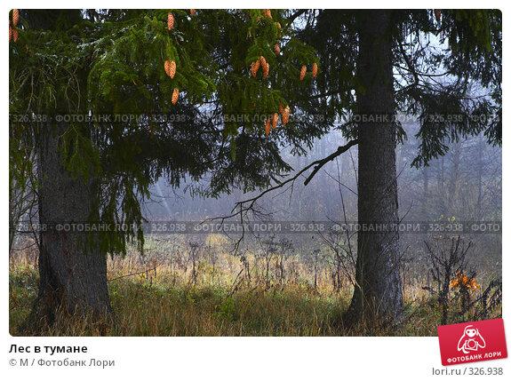 Купить «Лес в тумане», фото № 326938, снято 23 апреля 2018 г. (c) М / Фотобанк Лори