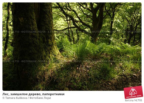 Лес, замшелое дерево, папоротники, фото № 4710, снято 5 июня 2006 г. (c) Tamara Kulikova / Фотобанк Лори