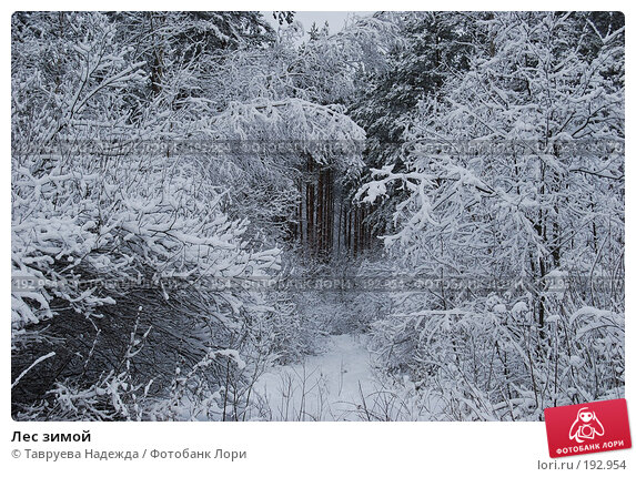 Лес зимой, фото № 192954, снято 27 января 2008 г. (c) Тавруева Надежда / Фотобанк Лори