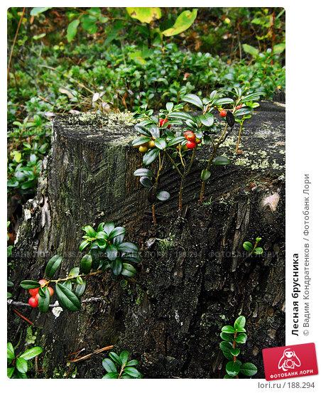 Лесная брусника, фото № 188294, снято 8 декабря 2016 г. (c) Вадим Кондратенков / Фотобанк Лори