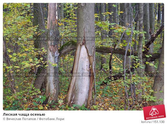 Лесная чаща осенью, фото № 151130, снято 8 октября 2006 г. (c) Вячеслав Потапов / Фотобанк Лори