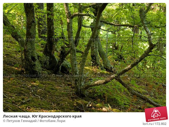 Купить «Лесная чаща. Юг Краснодарского края», фото № 172802, снято 6 августа 2007 г. (c) Петухов Геннадий / Фотобанк Лори