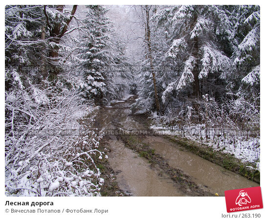 Лесная дорога, фото № 263190, снято 5 ноября 2007 г. (c) Вячеслав Потапов / Фотобанк Лори