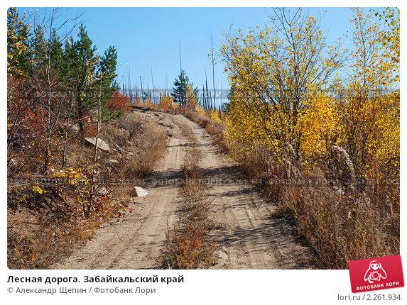 Лесная дорога. Забайкальский край. Стоковое фото, фотограф Александр Щепин / Фотобанк Лори