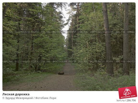 Лесная дорожка, фото № 286706, снято 12 мая 2008 г. (c) Эдуард Межерицкий / Фотобанк Лори