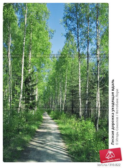 Лесная дорожка уходящая вдаль, фото № 310822, снято 25 мая 2008 г. (c) Игорь Соколов / Фотобанк Лори
