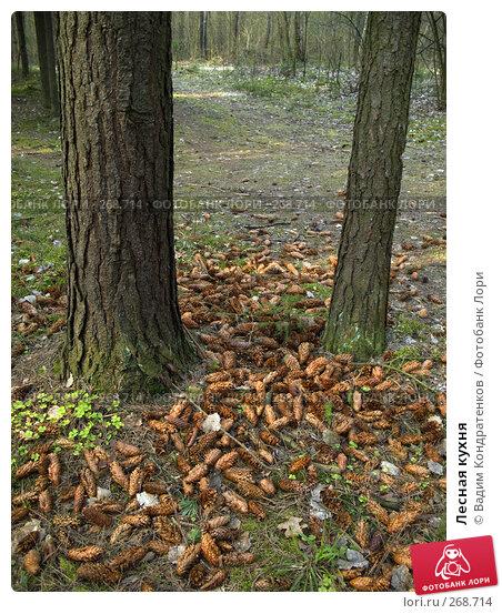 Лесная кухня, фото № 268714, снято 25 октября 2016 г. (c) Вадим Кондратенков / Фотобанк Лори
