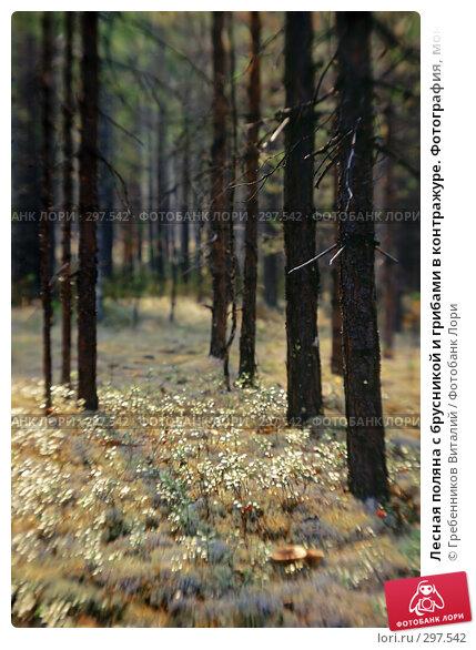 Лесная поляна с брусникой и грибами в контражуре. Фотография, монокль, фото № 297542, снято 21 октября 2016 г. (c) Гребенников Виталий / Фотобанк Лори