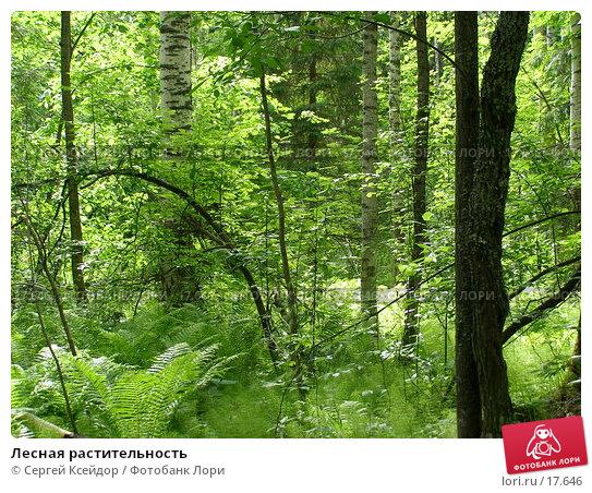 Лесная растительность, фото № 17646, снято 11 июня 2006 г. (c) Сергей Ксейдор / Фотобанк Лори