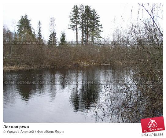 Лесная река, фото № 40666, снято 28 апреля 2007 г. (c) Удодов Алексей / Фотобанк Лори