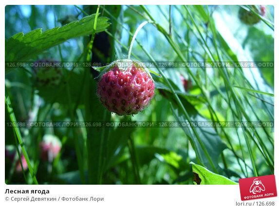 Лесная ягода, фото № 126698, снято 8 июля 2007 г. (c) Сергей Девяткин / Фотобанк Лори