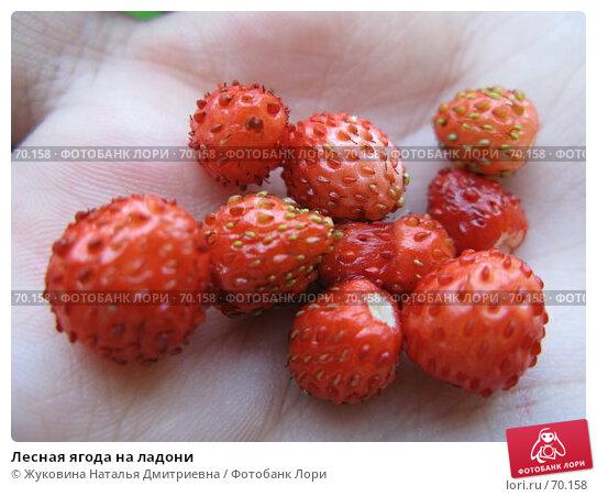Лесная ягода на ладони, фото № 70158, снято 18 июля 2007 г. (c) Жуковина Наталья Дмитриевна / Фотобанк Лори