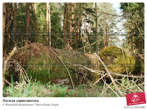 Лесная зарисовочка, фото № 250046, снято 12 апреля 2008 г. (c) Василий Аксюченко / Фотобанк Лори