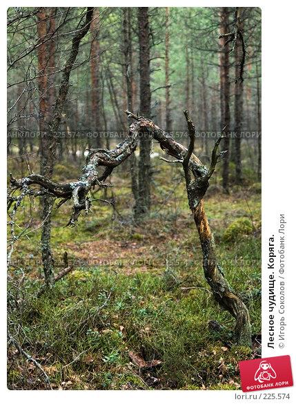 Купить «Лесное чудище. Коряга.», фото № 225574, снято 10 марта 2008 г. (c) Игорь Соколов / Фотобанк Лори