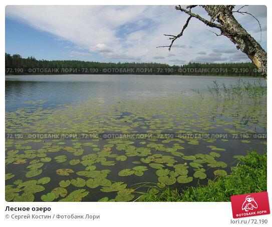 Купить «Лесное озеро», фото № 72190, снято 11 августа 2007 г. (c) Сергей Костин / Фотобанк Лори