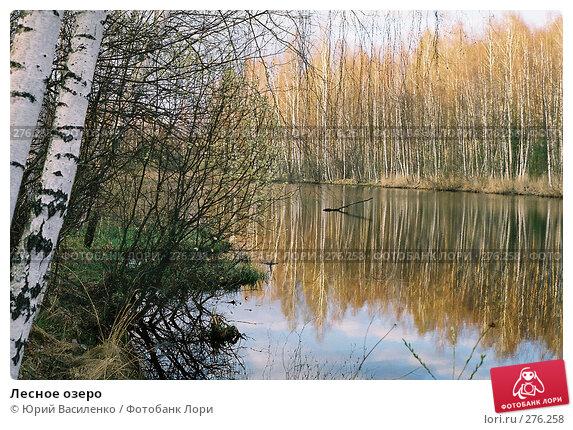 Лесное озеро, фото № 276258, снято 20 февраля 2017 г. (c) Юрий Василенко / Фотобанк Лори