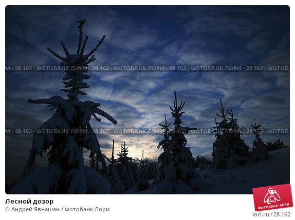 Лесной дозор, фото № 28162, снято 28 декабря 2005 г. (c) Андрей Явнашан / Фотобанк Лори