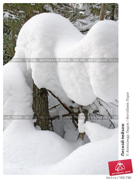 Лесной пейзаж, фото № 169746, снято 4 января 2008 г. (c) Александр Лядов / Фотобанк Лори