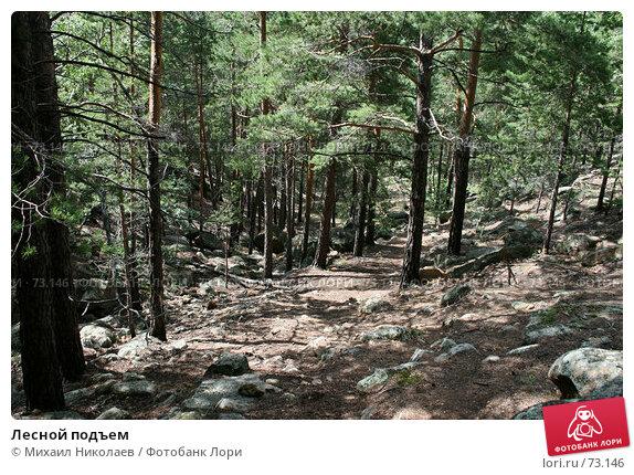 Лесной подъем, фото № 73146, снято 29 июля 2007 г. (c) Михаил Николаев / Фотобанк Лори