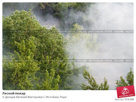 Лесной пожар, фото № 314098, снято 7 июня 2008 г. (c) Донцов Евгений Викторович / Фотобанк Лори