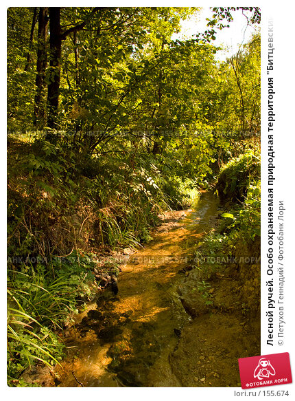 """Лесной ручей. Особо охраняемая природная территория """"Битцевский лес"""", фото № 155674, снято 4 сентября 2007 г. (c) Петухов Геннадий / Фотобанк Лори"""