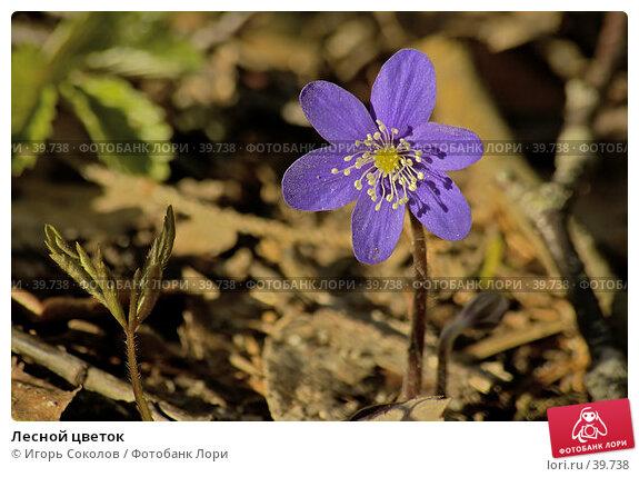 Лесной цветок, фото № 39738, снято 30 марта 2017 г. (c) Игорь Соколов / Фотобанк Лори