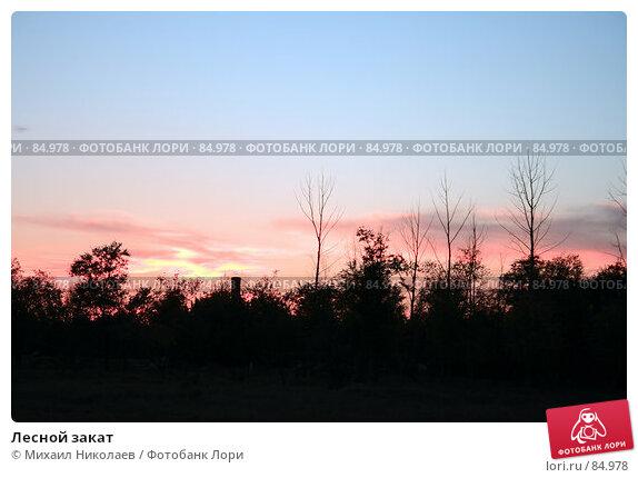 Купить «Лесной закат», фото № 84978, снято 5 сентября 2007 г. (c) Михаил Николаев / Фотобанк Лори