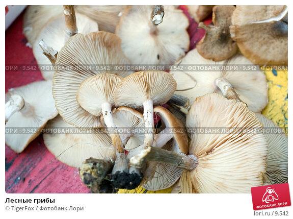 Лесные грибы, фото № 9542, снято 16 сентября 2006 г. (c) TigerFox / Фотобанк Лори
