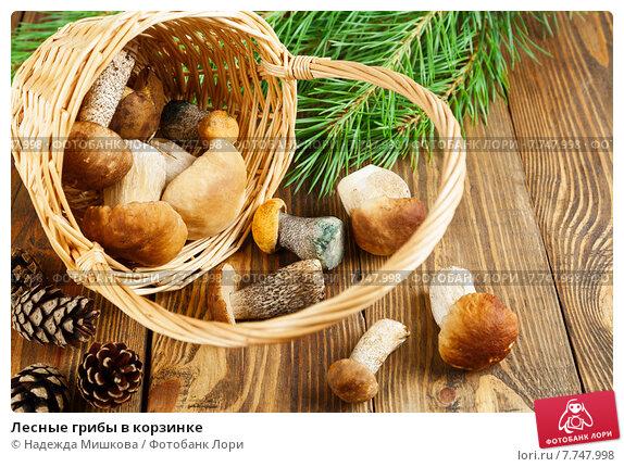 Лесные грибы в корзинке. Стоковое фото, фотограф Надежда Мишкова / Фотобанк Лори