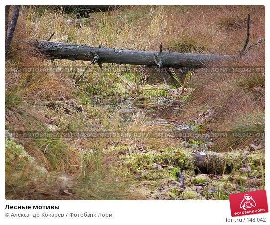 Лесные мотивы, фото № 148042, снято 3 ноября 2007 г. (c) Александр Кокарев / Фотобанк Лори