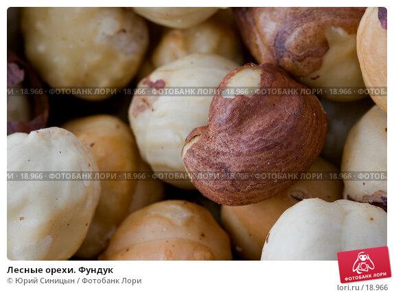 Лесные орехи. Фундук, фото № 18966, снято 22 февраля 2007 г. (c) Юрий Синицын / Фотобанк Лори