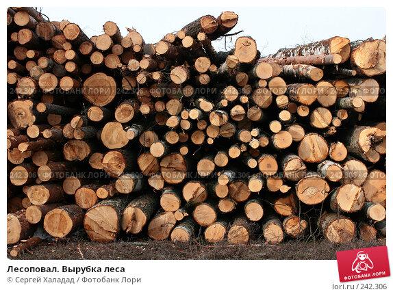 Лесоповал. Вырубка леса, фото № 242306, снято 3 апреля 2008 г. (c) Сергей Халадад / Фотобанк Лори