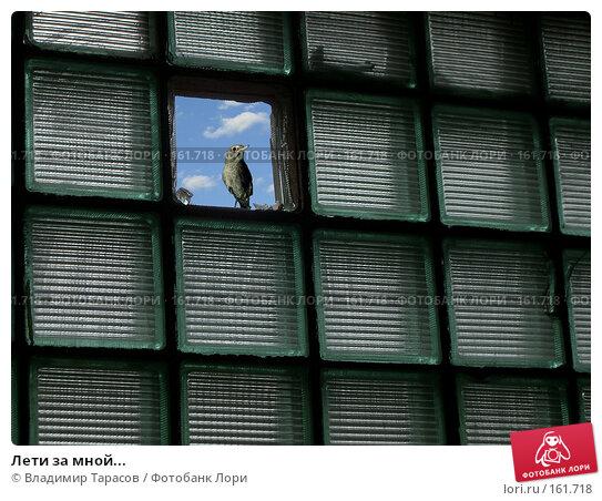 Лети за мной..., фото № 161718, снято 25 июня 2017 г. (c) Владимир Тарасов / Фотобанк Лори
