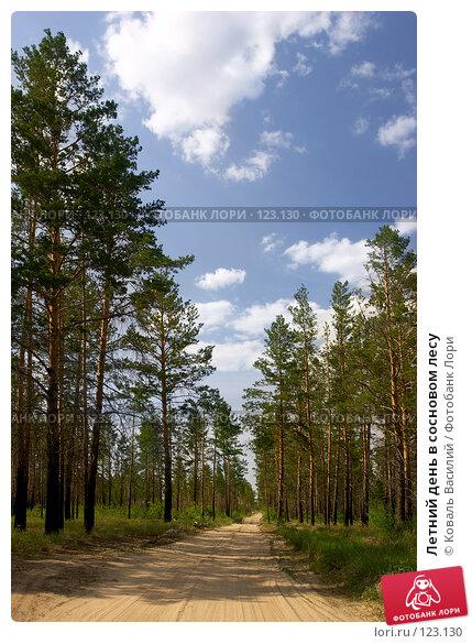 Летний день в сосновом лесу, фото № 123130, снято 10 июня 2006 г. (c) Коваль Василий / Фотобанк Лори