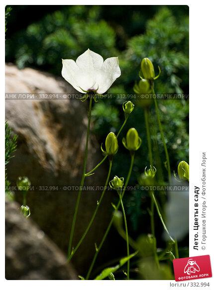 Лето. Цветы в саду, фото № 332994, снято 26 июня 2007 г. (c) Горшков Игорь / Фотобанк Лори