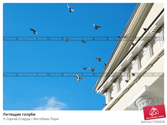 Летящие голуби, фото № 119614, снято 26 декабря 2006 г. (c) Сергей Старуш / Фотобанк Лори