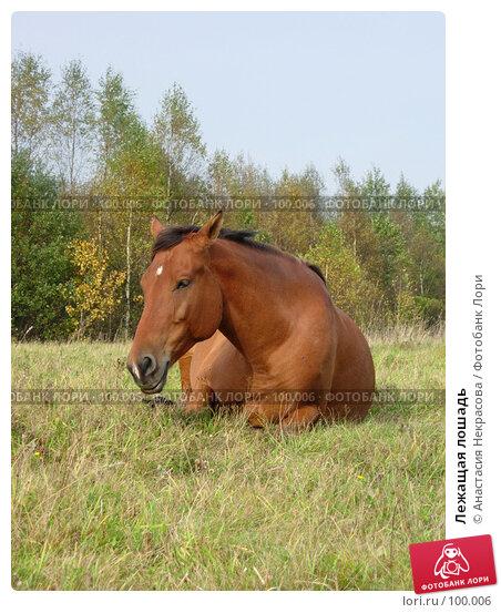 Лежащая лошадь, фото № 100006, снято 26 сентября 2007 г. (c) Анастасия Некрасова / Фотобанк Лори