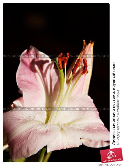 Купить «Лилия, тычинки и пестики, крупный план», фото № 226238, снято 16 февраля 2008 г. (c) Sergey Toronto / Фотобанк Лори