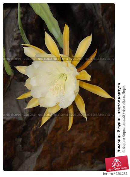 Лимонный пунш - цветок кактуса, фото № 220282, снято 27 мая 2007 г. (c) Федор Королевский / Фотобанк Лори