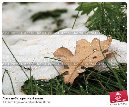 Купить «Лист дуба, крупный план», фото № 147530, снято 11 ноября 2007 г. (c) Ольга Хорькова / Фотобанк Лори