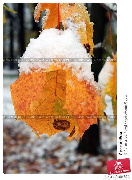 Лист клёна, фото № 100394, снято 16 октября 2007 г. (c) Parmenov Pavel / Фотобанк Лори