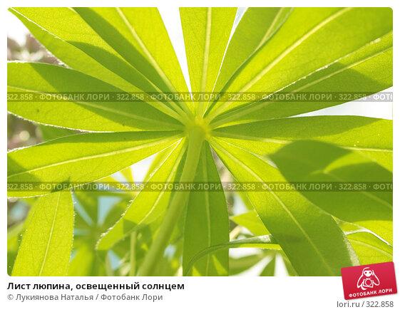Лист люпина, освещенный солнцем, фото № 322858, снято 10 июня 2008 г. (c) Лукиянова Наталья / Фотобанк Лори