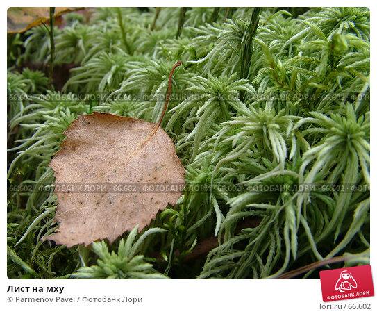 Лист на мху, фото № 66602, снято 11 сентября 2005 г. (c) Parmenov Pavel / Фотобанк Лори